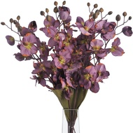 Orchid  Dark  Purple