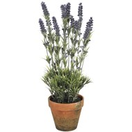 Large  Lavender  In  Pot