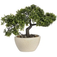 Bonsai  Tree  In  Cream  Ceramic  Pot  -  27cm