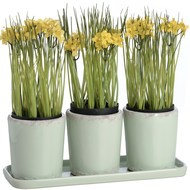Set  Of  Three  Rustic  Cream  Plant  Pots  With  Tray  (hom-559)
