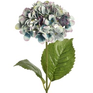 Blue single hydrangea stem