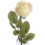 Autumn cream single rose stem