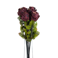 Autumn dark red single rose stem