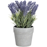 Lavender in stone effect pot - medium