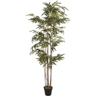 Tall Bamboo in Plain Black Pot