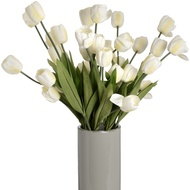 Large White Tulip Stem