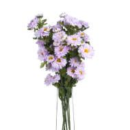 Wild Lilac Dahlias
