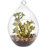 Hanging Teardrop Air Terrarium With Succulent Plant