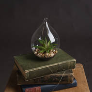 Hanging Air Terrarium With Succulent Plant