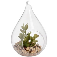 Hanging Tall Teardrop Air Terrarium With Succulent Plant