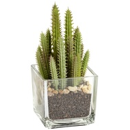 Cactus Plant In Glass Pot
