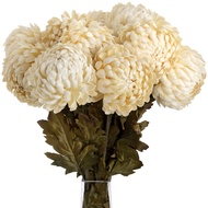 Cream Chrysanthemum