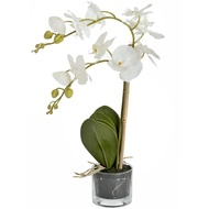 Serenity White Potted Orchid