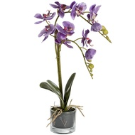 Serenity Purple Potted Orchid