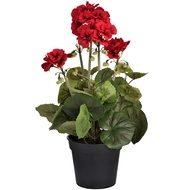 Red Potted Begonia