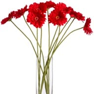 Red Gerbera Stem