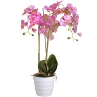Prestiage Pink Potted Orchid