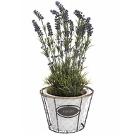 Fleurs Singular Wired Plant Pot with Rope Detailing