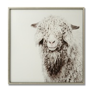 Merino Sheep Glass Image with Silver Frame