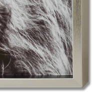 Highland Cow Left Facing Glass Image with Silver Frame - Thumb 2