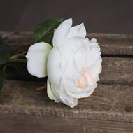 Blush Garden Rose - Thumb 3
