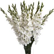 White Gladioli - Thumb 4