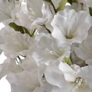 White Gladioli - Thumb 5