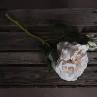 White Short Stem Rose - Thumb 2