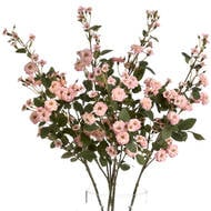 Pink Wild Meadow Rose - Thumb 4
