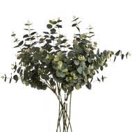 Eucalyptus Spray - Thumb 4