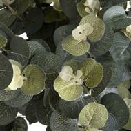 Eucalyptus Spray - Thumb 5