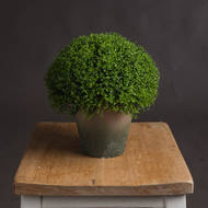 Hebe Globe Pot