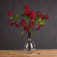 Red Autumnal Viburnum