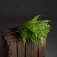 Green Fern Bunch