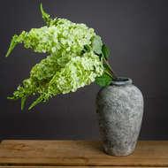 Green Hydrangea Paniculata
