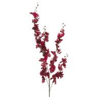 Red Delphinium