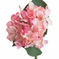 Pink Posy Hydrangea - Thumb 4