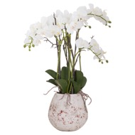 Large Stone Potted Orchid With Roots
