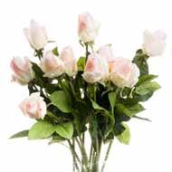 Cream Closed Rose Bud