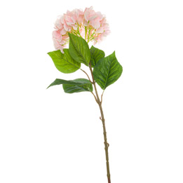Single Pink Hydrangea