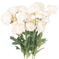 Cream Ranunculus - Thumb 1