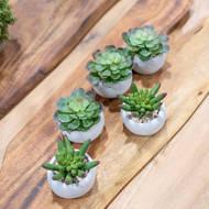 Miniature Little Jewel Succulent In Cement Pot - Thumb 2