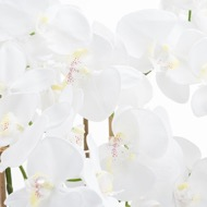 Large White Tall Orchid In Glass Pot - Thumb 2