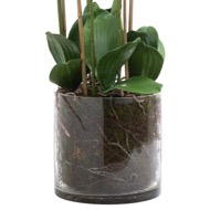 Large White Tall Orchid In Glass Pot - Thumb 3
