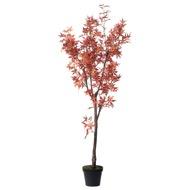 Large Acer Tree - Thumb 1