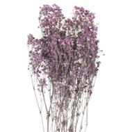 Dried Purple Babys Breath Bunch